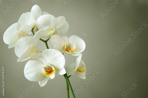 fototapeta orchidee wei. Black Bedroom Furniture Sets. Home Design Ideas