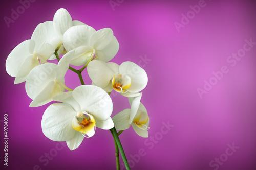 fototapete wei e orchidee fototapeten aufkleber poster. Black Bedroom Furniture Sets. Home Design Ideas
