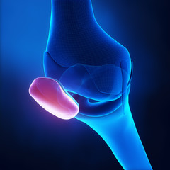 Patella anatomy