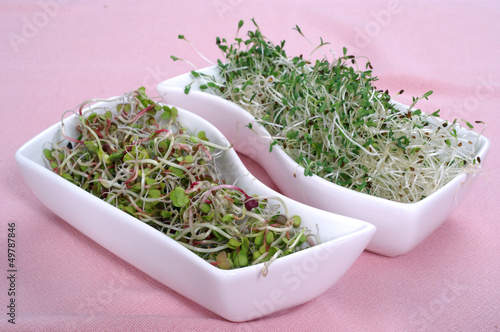 Fresh radish and alfalfa sprouts