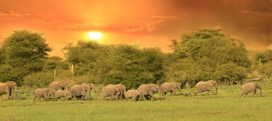 Troupeau d'éléphants au coucher de soleil.