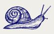 Garden snail. Doodle style - 49794252