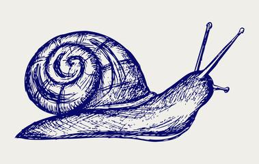 Garden snail. Doodle style