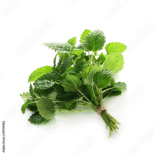 Herb Series - Lemon Balm