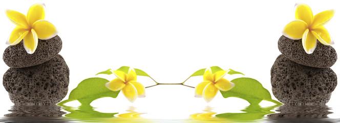 composition florale, minérale et végétale