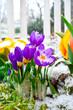 Frühlinsanfang