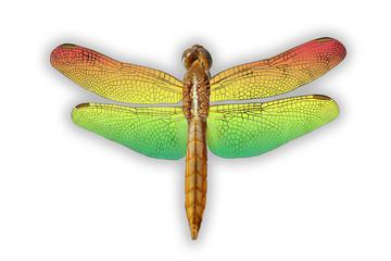 libellula d'orata