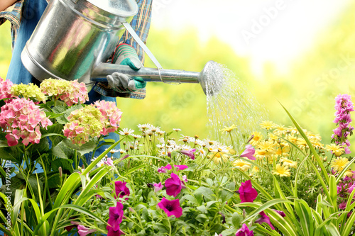 watering flowers in garden