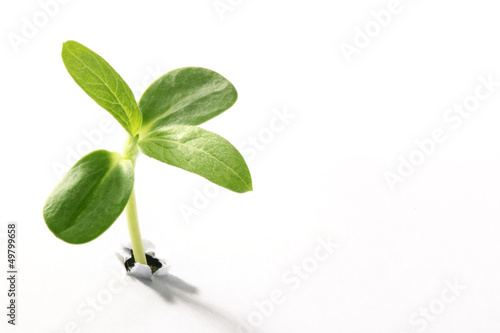 Leinwandbild Motiv Young sprout