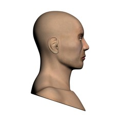 Human head - Side view
