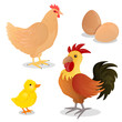 Vector Illustration of Rooster, Hen, Chick and Eggs
