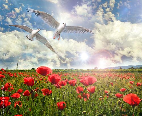 Möwen über Wildblumen-Feld