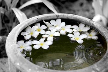 Monoi flowers floating in water
