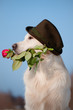 dog in a hat holding a rose flower