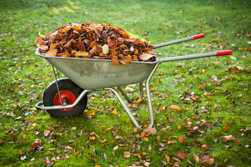 wheelbarrow full of dried leaves