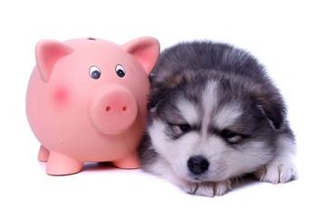 schlafender Welpe mit Sparschwein