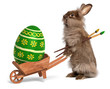 Funny Easter bunny rabbit with a wheelbarrow and an Easter egg