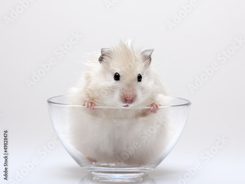 hamster peeking out of a glass cup