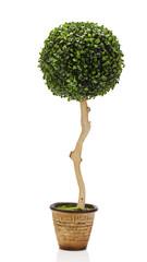abstract composition from green artificial grass arrangement cen