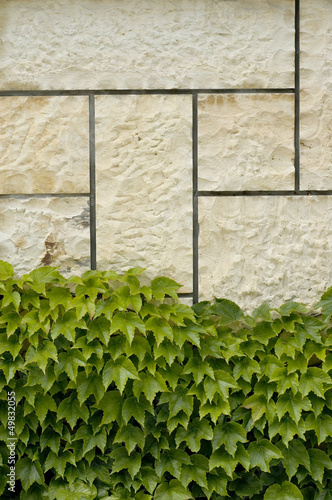 stone wall dotted with wine