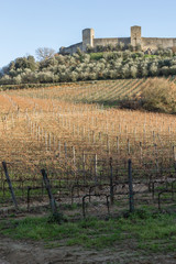 Vineyards in winter close to monteriggioni, Tuscany, Italy