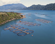 salmon cages - 49839485