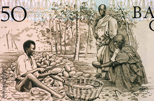 Men Splitting Cacao Pots