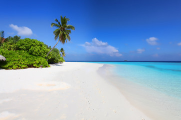 Malediven Insel Strand, Palmen und Meer
