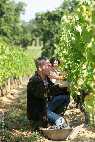 couple working in their vineyard