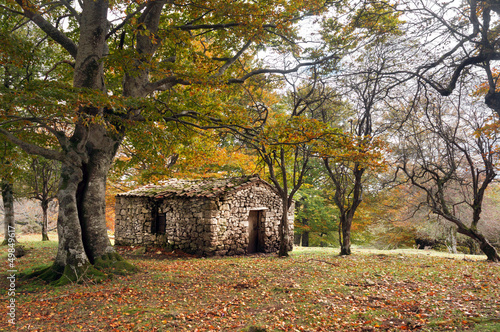 stone cabin in autumn forest