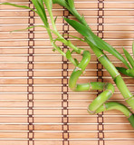beautiful green bamboo on bamboo mat