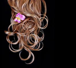 curly brown hair over black background with pink iris flower