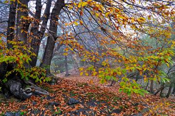 Etna - beautiful autumn landscape