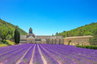Abbey of Senanque blooming lavender flowers. Gordes, Luberon, Pr