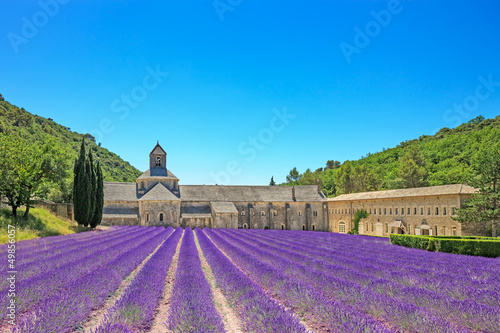 Abbey of Senanque blooming lavender flowers. Gordes, Luberon, Pr - 49856057