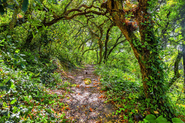 pathway trough a wild forest