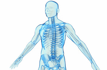 Transparent blue human body 3D model on white background