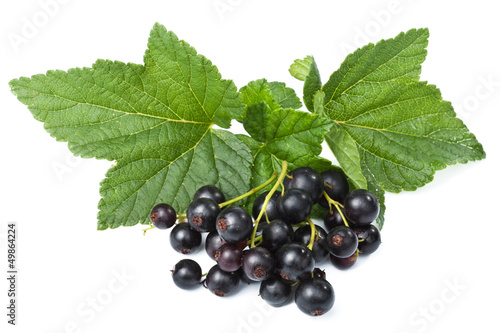 fresh blackcurrant isolated