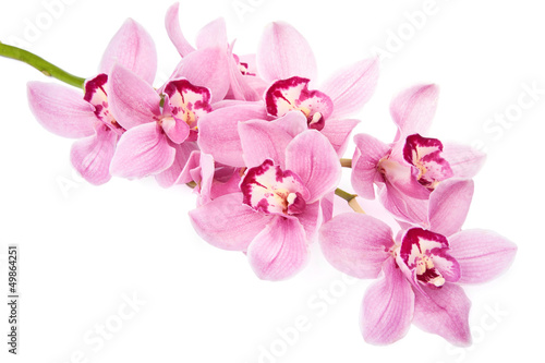 Sticker pink orchid flowers isolated