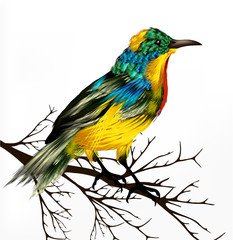Colorful  vector realistic tropical bird sit at the branch on wh