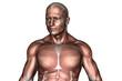 Oberkörper Brust