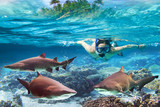 Woment snorkeling in the tropical water with dangerous sharks