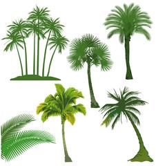 9 Palmen