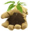 jeune arbre dans un gant de cuir
