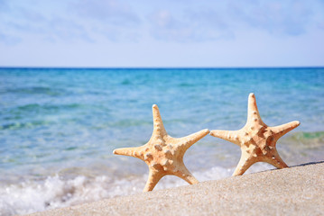 holiday concept - two sea-stars walking on sand beach against wa