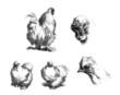 Hen - Poule - Huhn