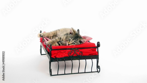 Cute kitten resting on small bed