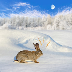Grey rabbit sitting on the snow-bound hill