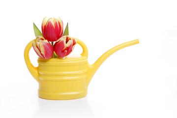 Gießkanne mit Tulpen
