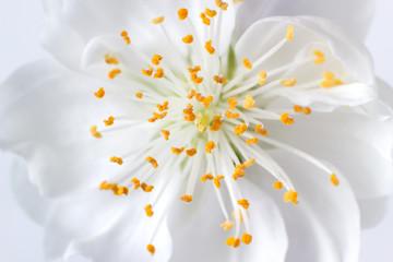 Closeup of a white blossom